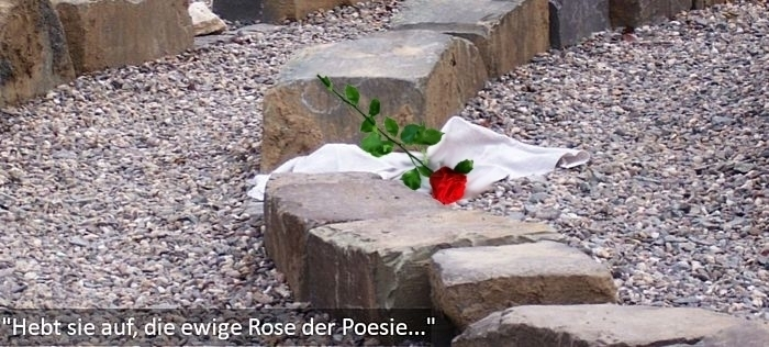 Rose im Labyrinth